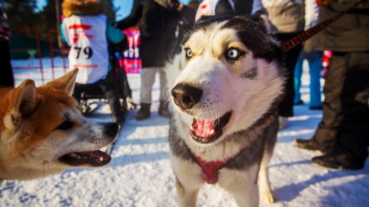 Замерзшие в Новосибирске: 15 забавных фото животных, которые оказались не готовы к морозам