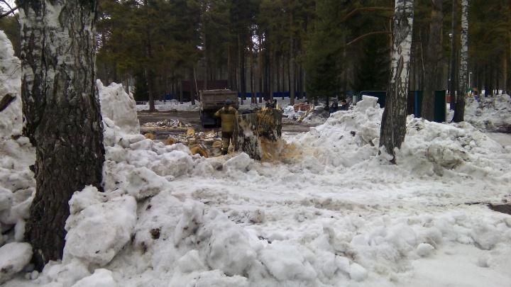 Фото: в парке «Сосновый бор» начали пилить деревья