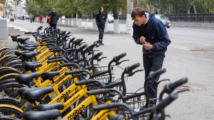 Не умеешь — научим: для волгоградцев 18+ открывают школу велоезды