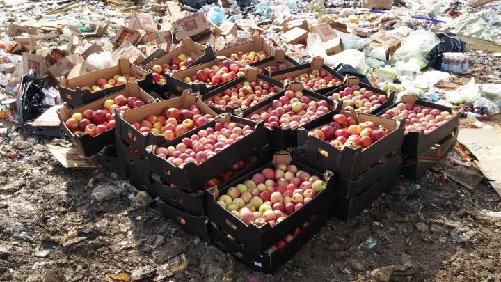 На Енисейском рынке нашли и раздавили бульдозером 741 кг яблок из Польши
