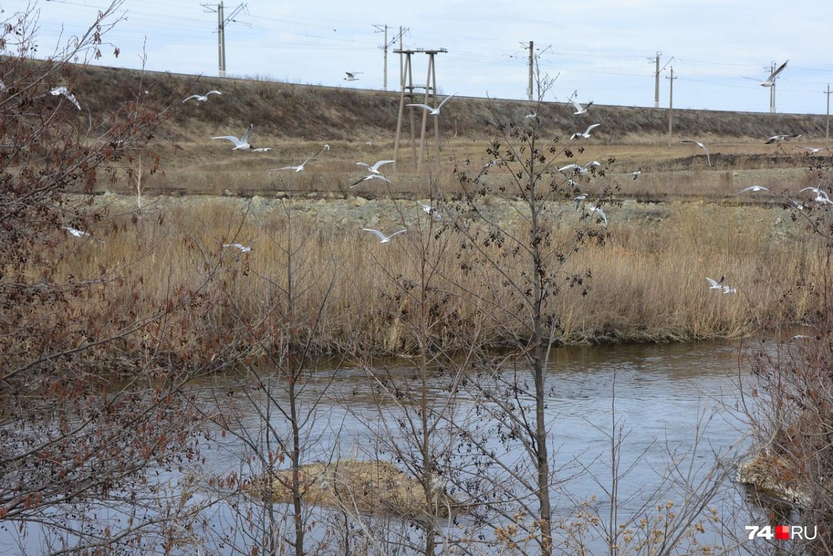 Над Течей — полчища чаек. На горизонте видна железная дорога, мост находится слева (не в кадре)