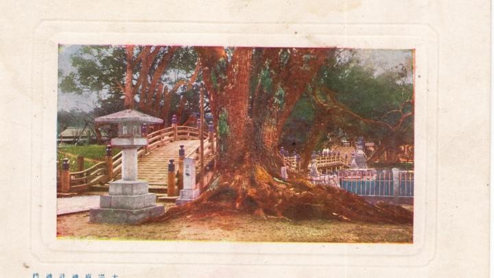 Новосибирец нашёл в мусорке семейный архив с фронтовыми открытками