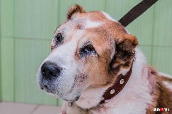 Под наблюдением ветеринаров Лаваш находился больше месяца. Сначала его состояние улучшилось, но потом резко отказали почки