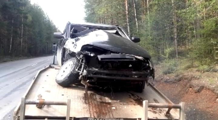 На Урале из-за выбежавшего на дорогу медведя разбились два автомобиля