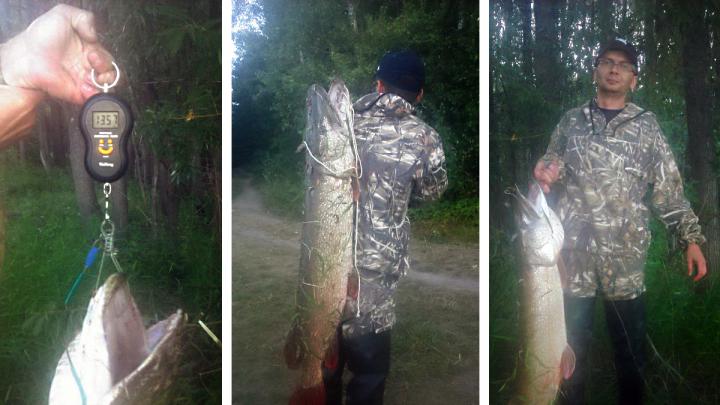 Новосибирец поймал в Оби рыбу размером с человека