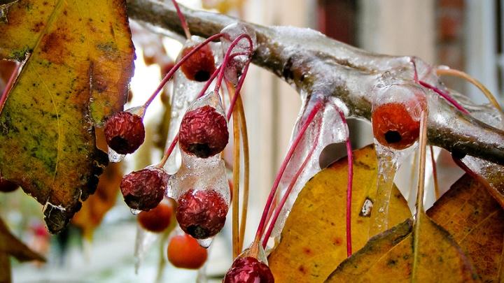 Омские синоптики спрогнозировали на выходные мокрый снег и гололёд