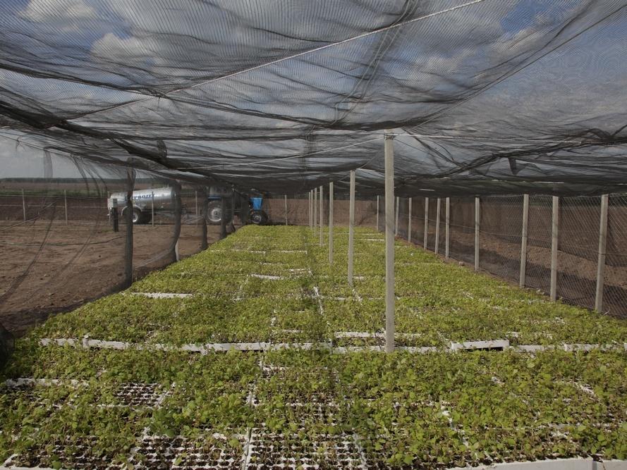 Промышленное производство голубики открылось вНижегородской области