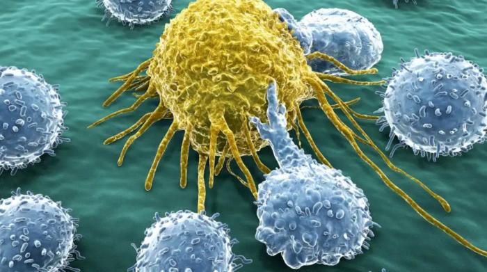 Раковая клетка под 20 000-кратным увеличением электронного микроскопа