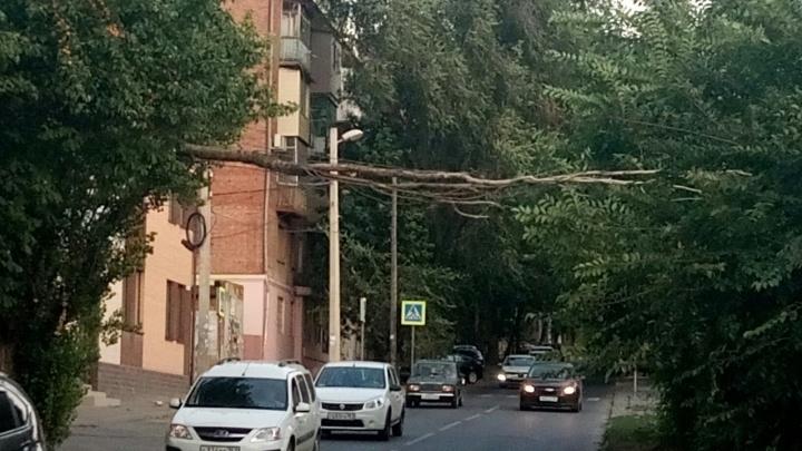 Сломалось дерево: в Ростове ветка зависла на проводах