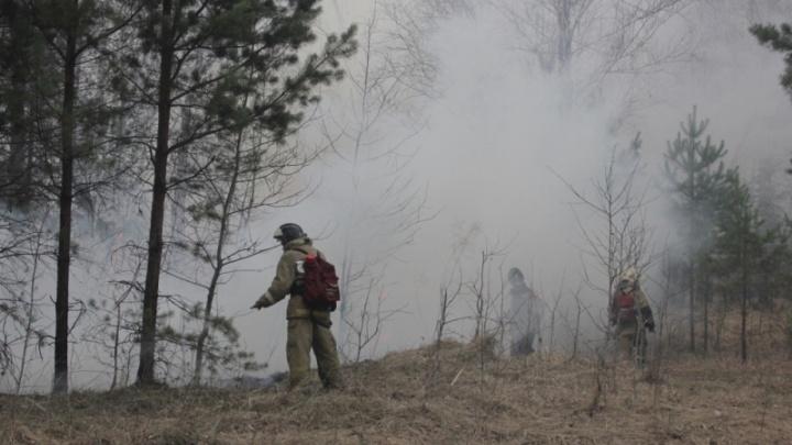 Штрафы немаленькие: уральцам запретили ходить в лес и жечь костры в праздничные дни
