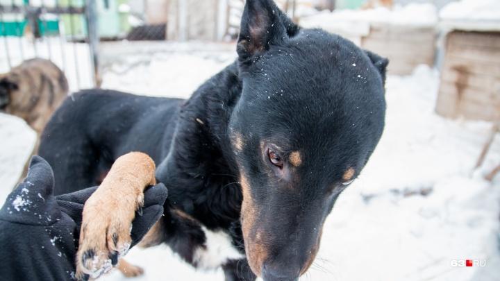 Всплыло по весне: работники самарских парков попросили власти решить проблему с выгулом собак