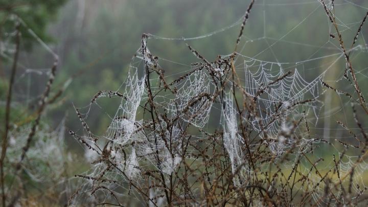 Пауки оплели паутиной окрестности заповедника, предсказав морозную зиму
