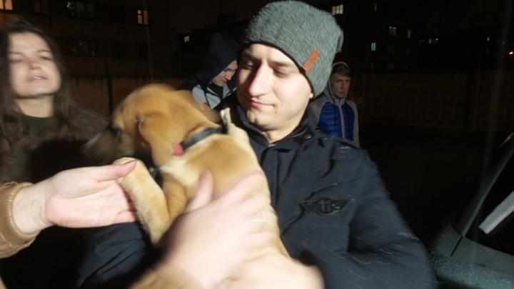 Читатели E1.RU спасли щенка, который был заперт в машине четыре дня