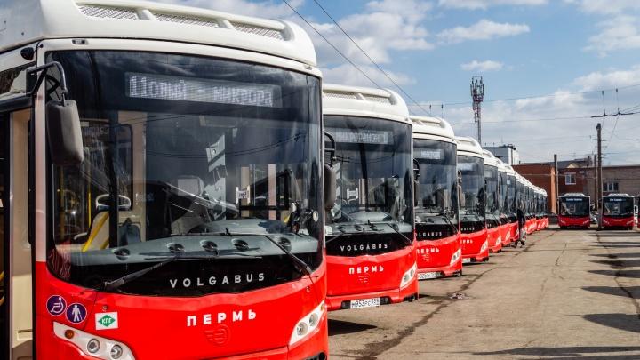 В Прикамье запустят 15 новых автобусных маршрутов