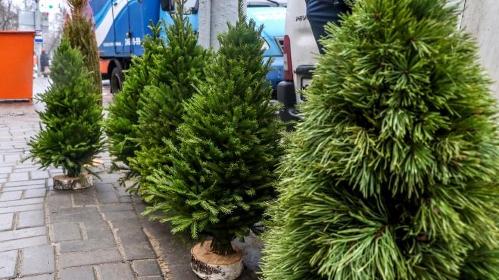 Успеть до 31 декабря:публикуем карту всех ёлочных базаров в Нижнем Новгороде