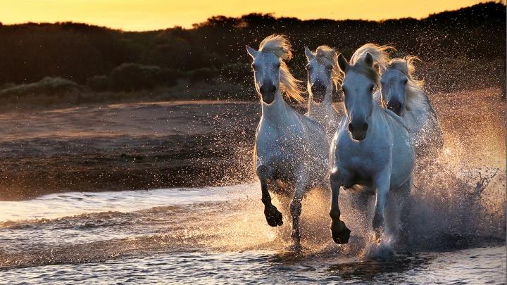 Лаванда и дикие лошади: новосибирский фотограф открыла выставку с красивейшими кадрами юга Франции