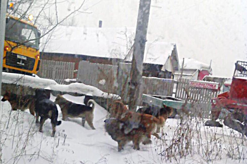 На этой неделе собаки загнали в подъезд детей и несколько часов не давали выйти
