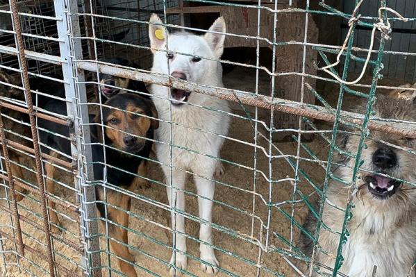 По словам волонтеров, собаки в приюте живут в ужасных условиях