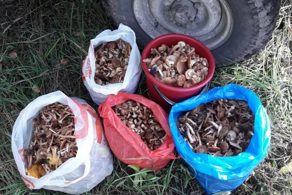 Высокая урожайность грибов будет держаться до заморозков