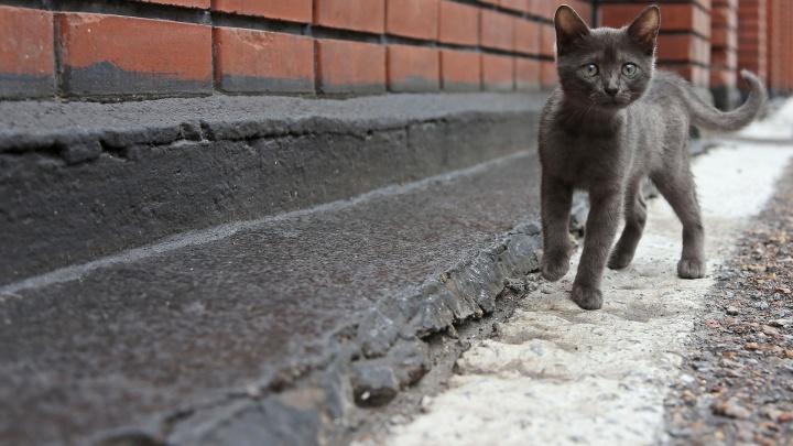Истошное мяу из подвала: в жилом доме Башкирии замуровали котов