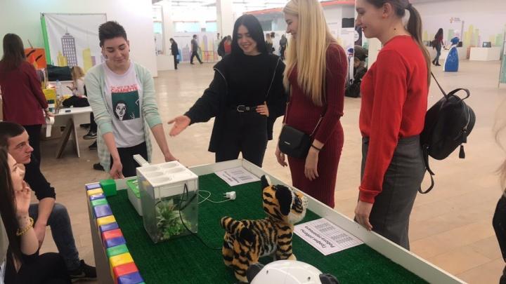 В ТЦ «Сибирский молл» открылся первый образовательно-развлекательный фестиваль