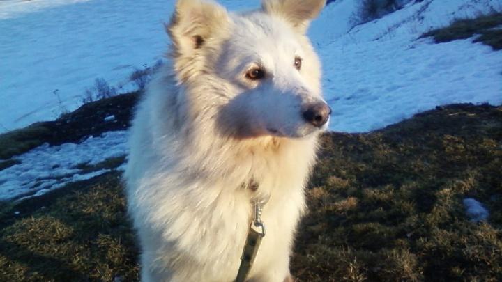 Воздушный Алмаз, мудрый Сэм, красотка Тайга: собаки из приюта в Катунино ждут своего опекуна