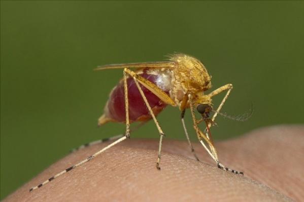 Британцы до сих пор боятся волгоградских комаров и мошки