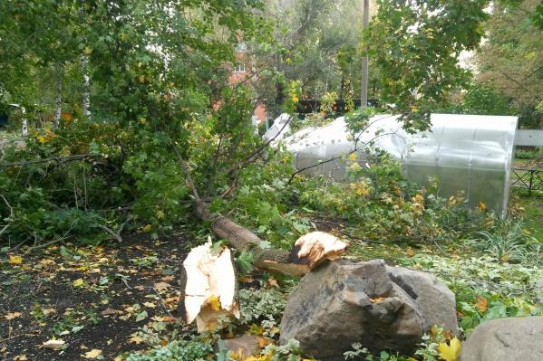 Дерево упало у входа, откуда днем выходят детишки на прогулку