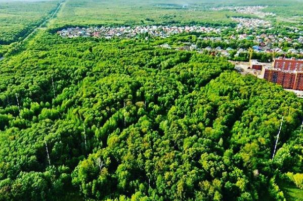 Микрорайон Новая Самара вплотную граничит с лесом