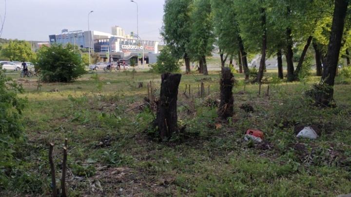 Челябинские чиновники спустя неделю объяснили, зачем вырубили деревья на Университетской Набережной