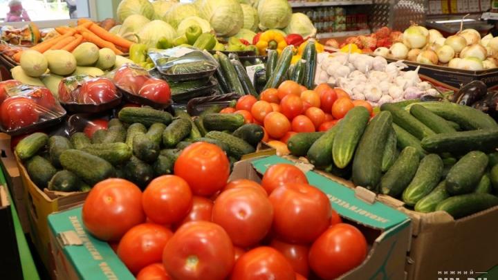 Томаты за 2 миллиарда: в Нижегородской области овощи будут выращивать круглый год