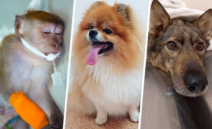 Этих ребят спасли ветеринары Екатеринбурга