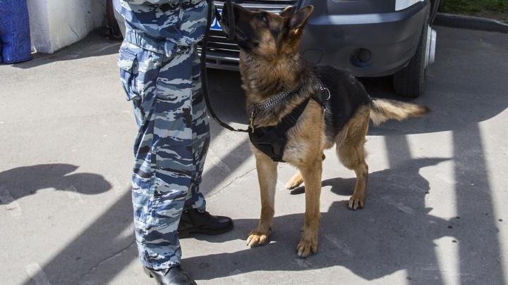 Новосибирца оштрафовали за нападение на сотрудников Росгвардии, искавших пропавшую шубу