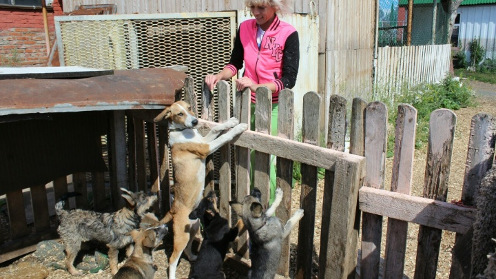 Сломали забор, запустили собак к кошкам и украли ошейники: в Кунгуре напали на приют для животных