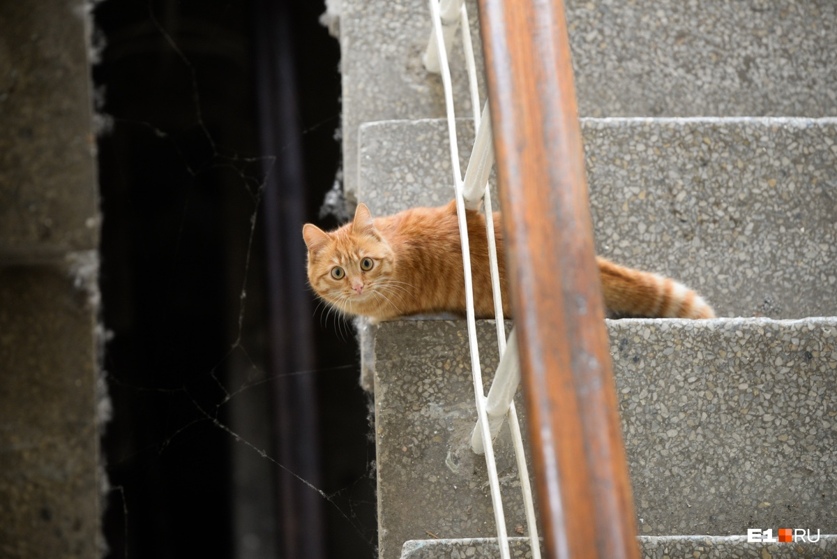 Гости в этом здании сейчас бывают редко, поэтому кошка с любопытством разглядывает чужих людей