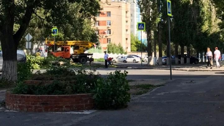 В Волгограде упавшее дерево перегородило дорогу к Волге