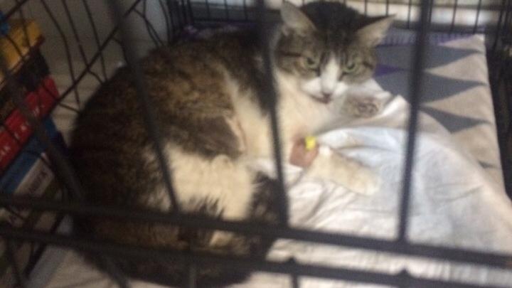 Житель малосемейки сбросил кошку с пятого этажа