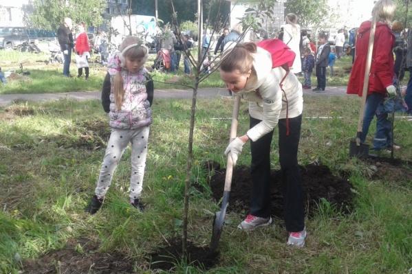Посадить деревья на улице 23-й Гвардейской вышли больше 100 человек