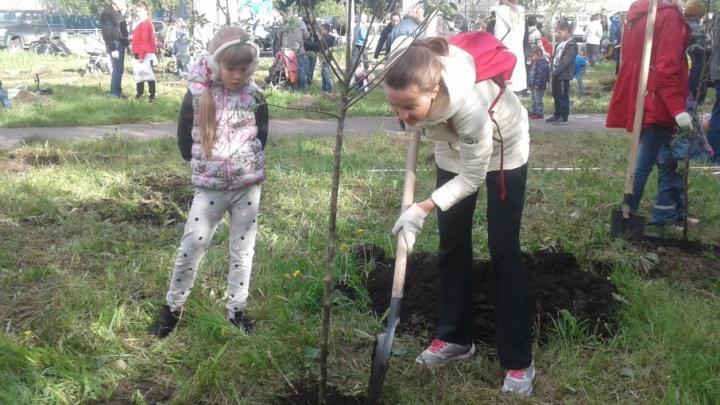 «Долг каждого — посадить дерево»: архангелогородцы высадили свою «Аллею славы»