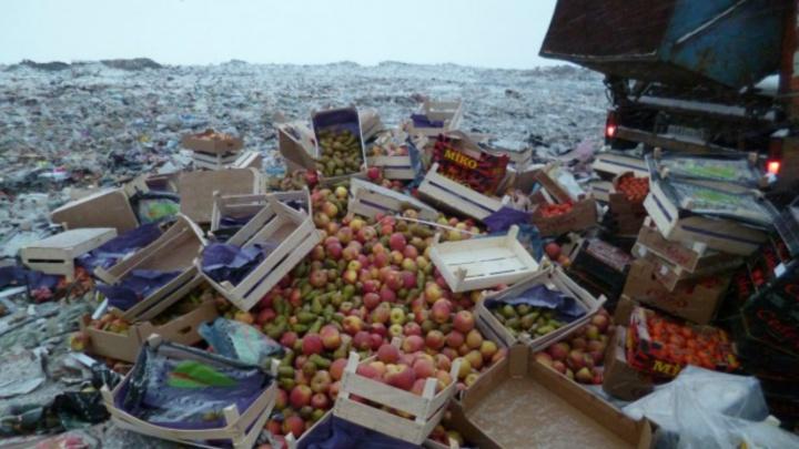 В Ярославле раскатали трактором больше двух тонн нелегальных овощей и фруктов