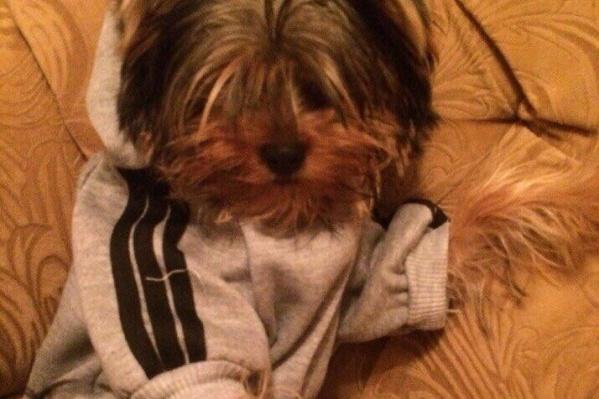 Погибшей собаке Варюшке было 3 года 4 месяца