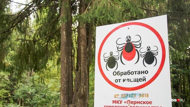 В Прикамье появились первые жертвы укусов клещей: в больницу обратились уже 29 человек