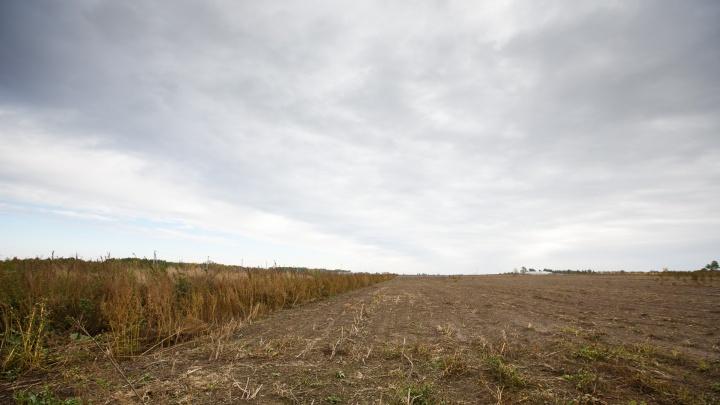 Трагедия на работе: в поле нашли мертвого тюменского животновода