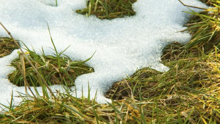 Кузбасс засыпало майским снегом