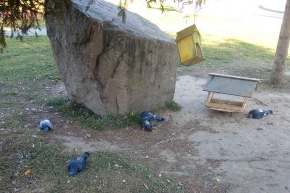 Жильцы считают, что птиц травят намеренно — в их корм добавляют отраву