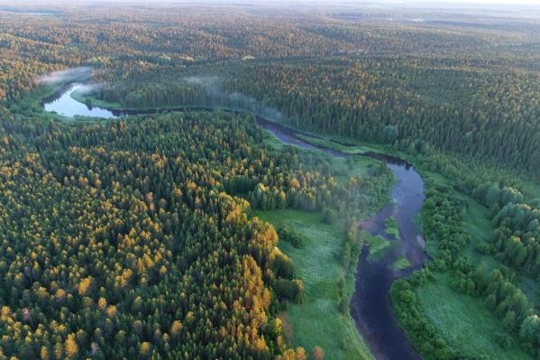 На территории заказника нельзя вести разрушающую лесные экосистемы деятельность