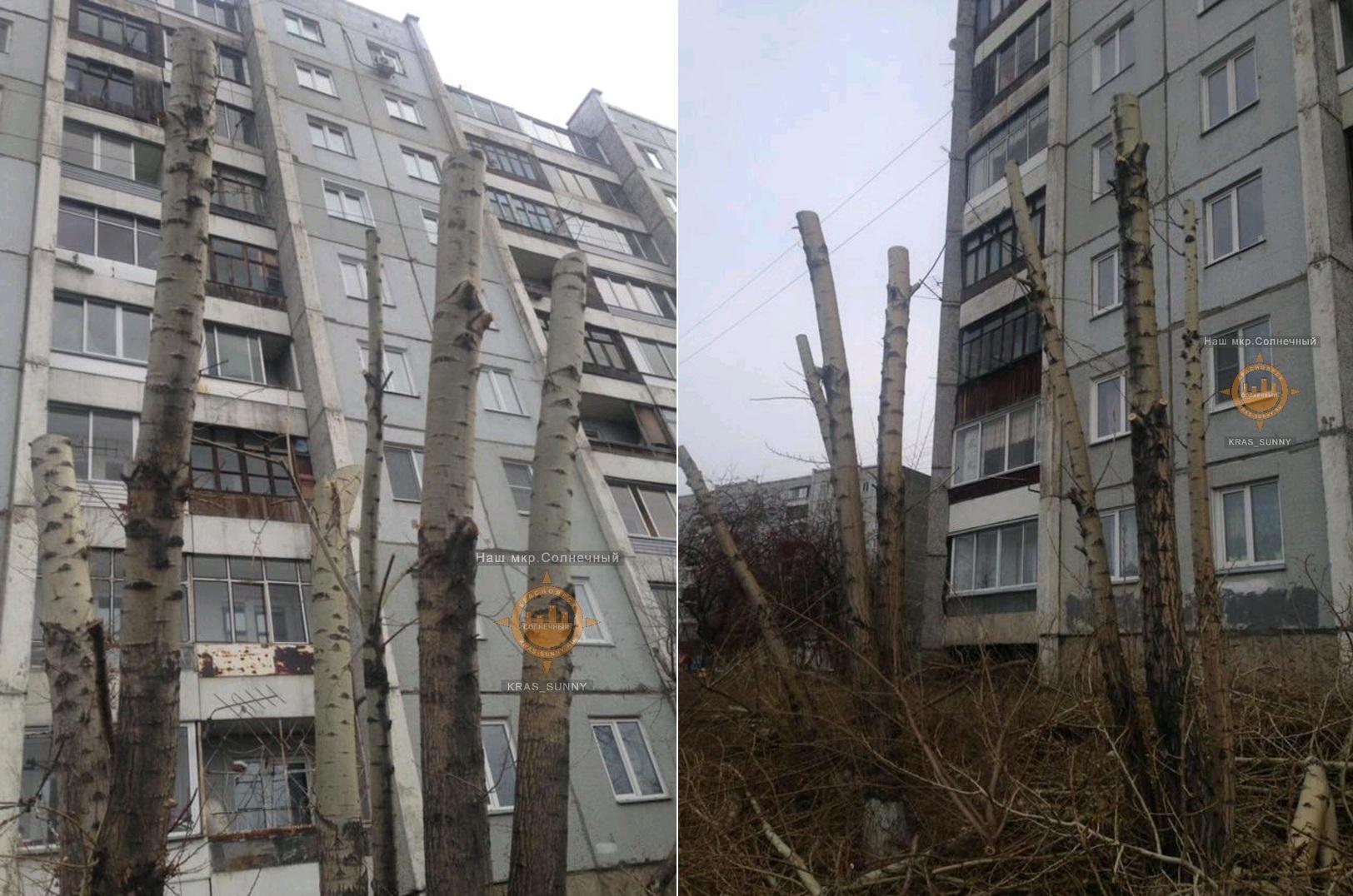 Возле ближайшего дома деревья также лишились веток
