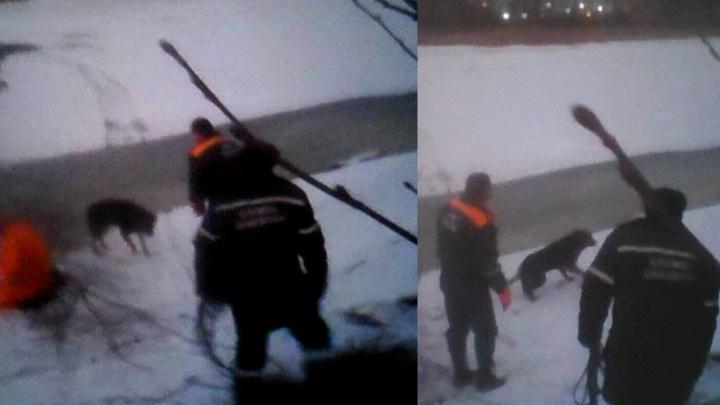 Укусила спасателя: в Ярославле вытащили из воды собаку, провалившуюся под тонкий лёд