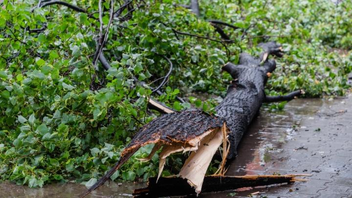 Из-за урагана в Пермском крае без электричества остались 14 тысяч человек