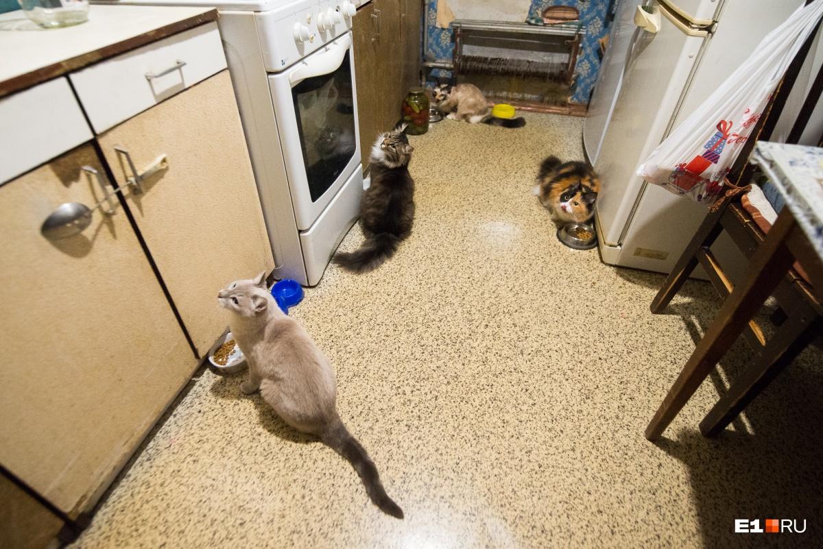В доме четыре кошки, всех их семья тоже приютила